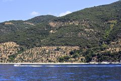 Olive groves on Holy Mount Athos. Stock Image