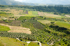 Olive Groves - Malaga - Spain Royalty Free Stock Images