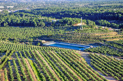 Olive groves. Mont-Roig del Camp (Spain). Royalty Free Stock Photography