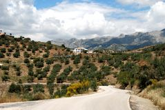 Olive groves and mountains, Andalusia, Spain. Stock Images