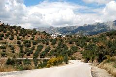 Olive groves and mountains, Andalusia, Spain. Country road leading to olive groves and mountains, between Rio Gordo and Periana, Axarquia region, Malaga Stock Images