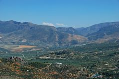 Olive groves and mountains, Jaen, Spain. Royalty Free Stock Photo