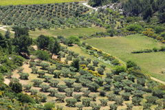 Olive groves near Château des Baux, France Royalty Free Stock Images