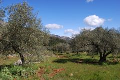 Olive groves, Refugio de Juanar, Andalusia, Spain. Stock Photo