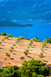 Olive groves by the sea in Dalmatia Stock Photos