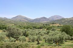 Olive groves in southern Crete Royalty Free Stock Image