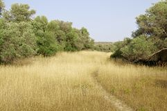 Olive groves in southern Crete Stock Photography