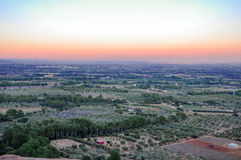 Olive groves at sunset. Mont-Roig del Camp (Spain). Royalty Free Stock Photo