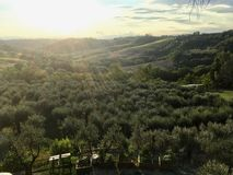 The olive groves of the Tuscany, Italia under the Sunset stock photo
