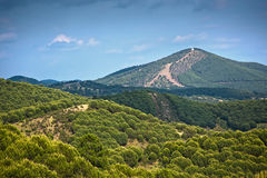 Olive groves by Villanueva De Algaidas Royalty Free Stock Images