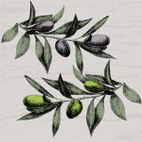 Olive hand drawn branches Stock Photo