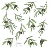 Olive. Hand drawn olive branch set in hand drawn retro style Royalty Free Stock Photo