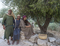 Olive harvest. NAZARETH, ISRAEL - OCT 15 : Palestinian farmers harvesting olive tree in October 15 2012 at Nazareth Village, historical re-creation of Nazareth Stock Images