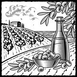 Olive harvest black and white Royalty Free Stock Images
