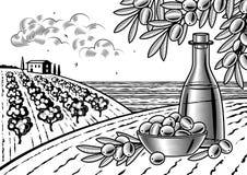 Olive harvest landscape black and white Royalty Free Stock Photo