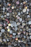 Olive harvest, newly picked olives of different colors and olive leafs. Royalty Free Stock Images