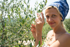 Olive harvesting Royalty Free Stock Photo