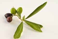 Olive I. Olives isolated on white with amazing colors Royalty Free Stock Image