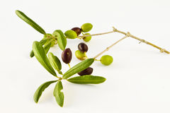Olive II Royalty Free Stock Photo