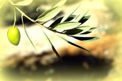Olive im Sonnenschein Lizenzfreie Stockfotografie