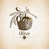 Olive label and logo design royalty free illustration