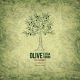 Olive labels design. With old background Stock Image