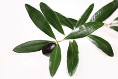 Olive and leaf Stock Images