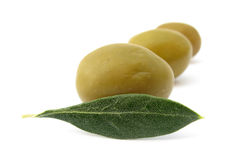 Olive leaf and fruits. The Olive (Olea europaea) is a species of small tree in the family Oleaceae, native to the coastal areas of the eastern Mediterranean Stock Photography