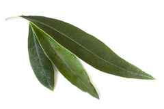 Olive Leaves Stock Image