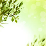 Olive leaves border Royalty Free Stock Image