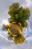 Olive little planet Stock Images