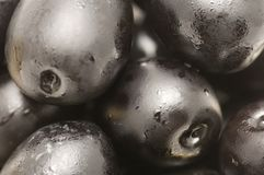 Olive Macro Stock Images
