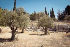 Olive Mountain gethsemaneträdgård, Israel Arkivfoto