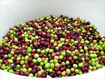 Olive nel telaio bianco Fotografia Stock