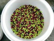 Olive nella benna Fotografia Stock Libera da Diritti