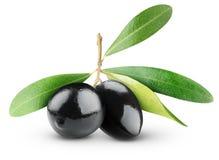 Olive nere Fotografia Stock