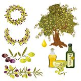 Olive oil and berries green tree organic vegetarian. Natural ripe healthy branch fresh ingredient fruit plant vector illustration. Cooking nature bottle virgin Stock Photos