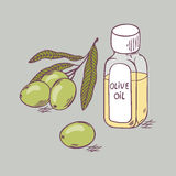 Olive oil in bottle with branch close up. Doodle illustration Stock Image