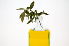 Olive oil bottles on white background. Olive oil some bottles on white background Royalty Free Stock Images