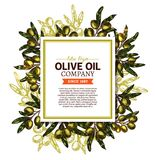 Vector olive olive company sketch poster Stock Images