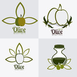 Olive oil design. Royalty Free Stock Photo