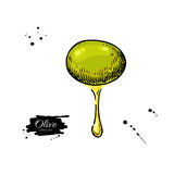 Olive with oil drop. Hand drawn vector illustration.  Stock Photos