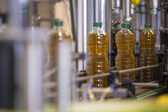 Olive oil factory, Olive Production Royalty Free Stock Photos