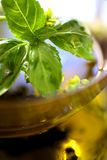 Olive oil with fresh basil Stock Photo