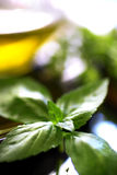 Olive oil with fresh basil Royalty Free Stock Photo