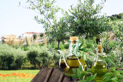 Olive oil in the garden Stock Photos