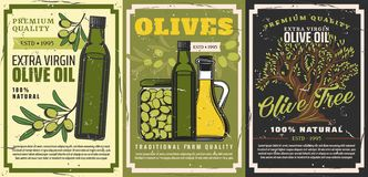 Olive oil, green fuits and tree. Vegetarian food. Olive oil and natural food products retro posters with vector bottles of extra virgin oil, jars of pickled royalty free illustration