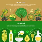 Olive Oil Horizontal Banners Images libres de droits