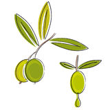 Olive oil vector. Illustration of olive branch with a drop of oil isolated on white vector Royalty Free Stock Photography