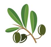 Olive oil  illustration Royalty Free Stock Photo